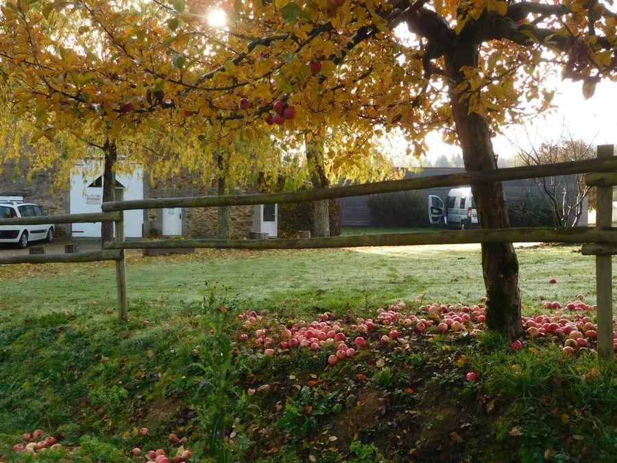 Aire camping-car à Firbeix (24450) - Photo 4